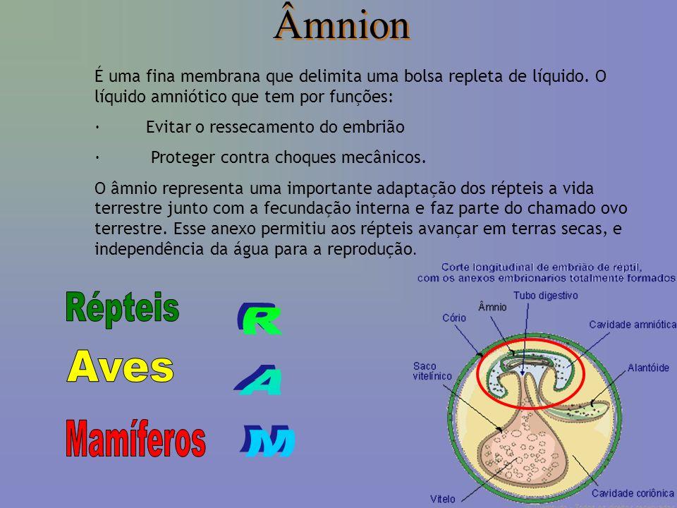 Âmnion É uma fina membrana que delimita uma bolsa repleta de líquido.