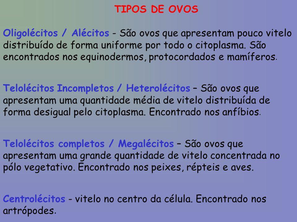 TIPOS DE OVOS Oligolécitos / Alécitos - São ovos que apresentam pouco vitelo distribuído de forma uniforme por todo o citoplasma. São encontrados nos