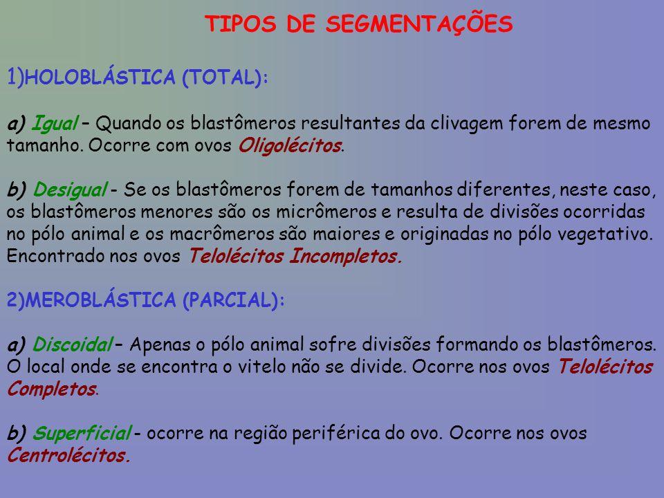 TIPOS DE SEGMENTAÇÕES 1) HOLOBLÁSTICA (TOTAL): a) Igual – Quando os blastômeros resultantes da clivagem forem de mesmo tamanho.
