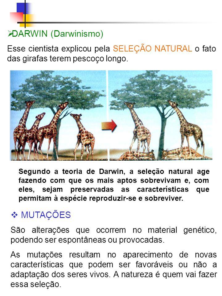 DARWIN (Darwinismo) Esse cientista explicou pela SELEÇÃO NATURAL o fato das girafas terem pescoço longo. Segundo a teoria de Darwin, a seleção natural