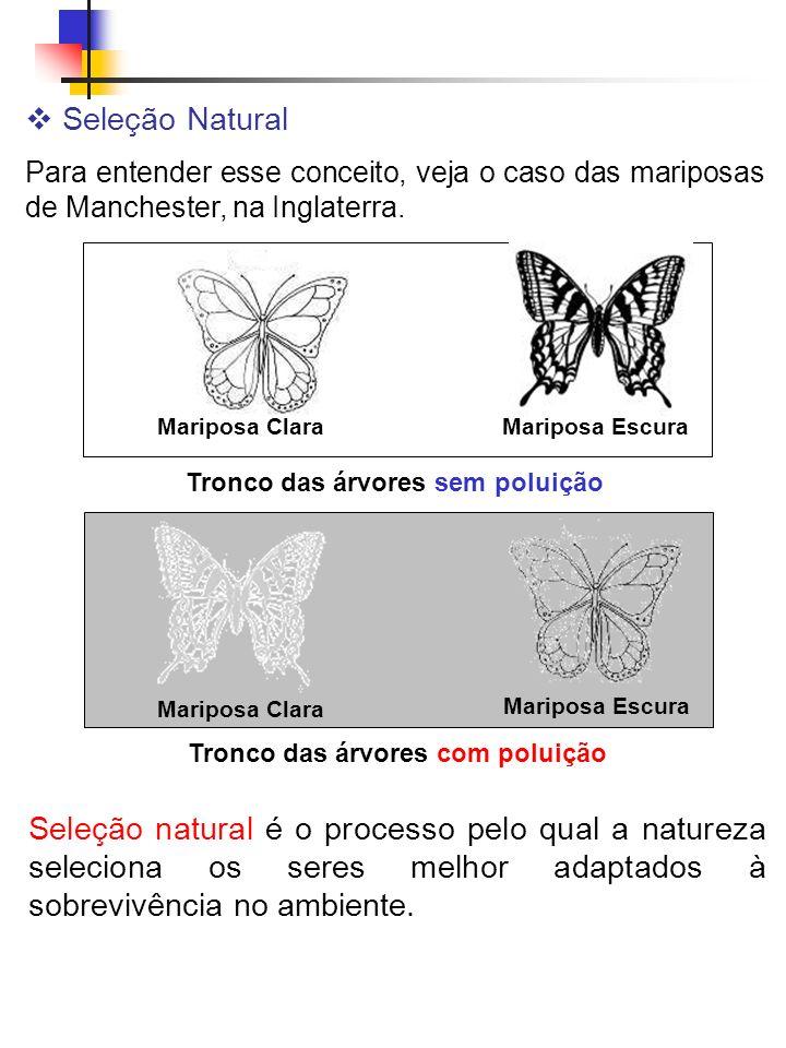 Seleção Natural Para entender esse conceito, veja o caso das mariposas de Manchester, na Inglaterra. Tronco das árvores sem poluição Mariposa Escura M