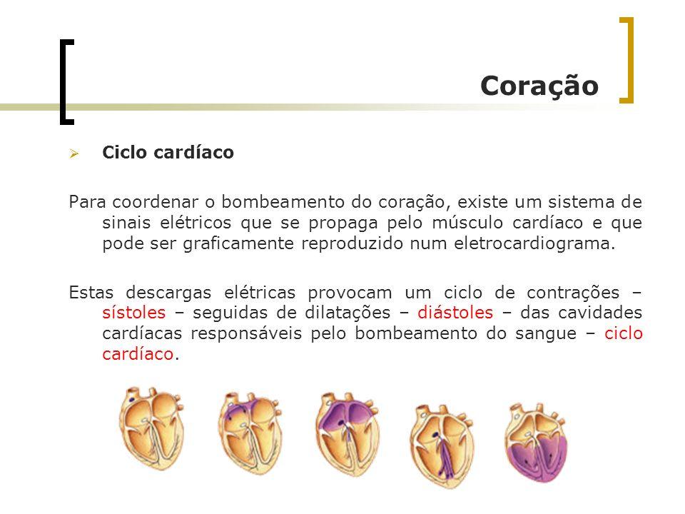 Ciclo cardíaco Para coordenar o bombeamento do coração, existe um sistema de sinais elétricos que se propaga pelo músculo cardíaco e que pode ser graf