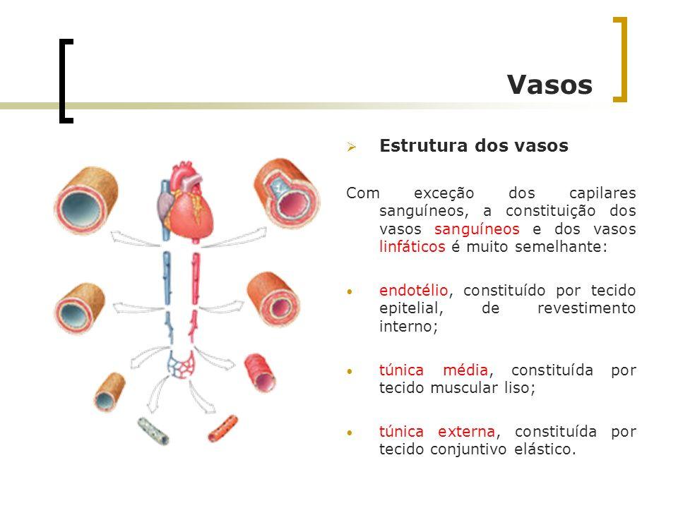 Vasos Estrutura dos vasos Com exceção dos capilares sanguíneos, a constituição dos vasos sanguíneos e dos vasos linfáticos é muito semelhante: endotél