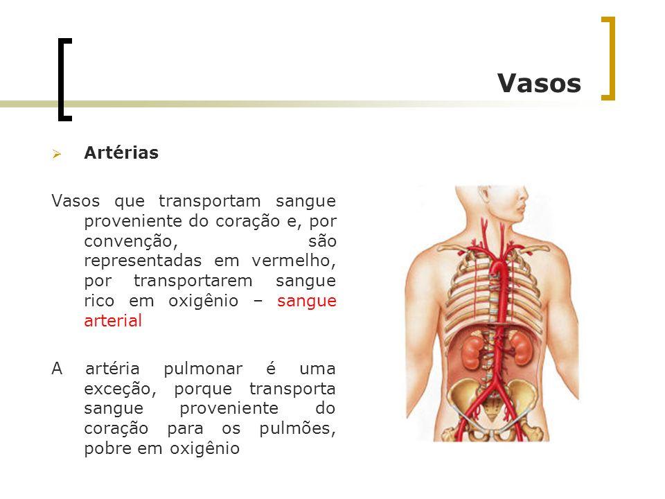 Vasos Artérias Vasos que transportam sangue proveniente do coração e, por convenção, são representadas em vermelho, por transportarem sangue rico em o