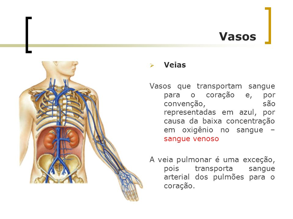 Vasos Veias Vasos que transportam sangue para o coração e, por convenção, são representadas em azul, por causa da baixa concentração em oxigênio no sa
