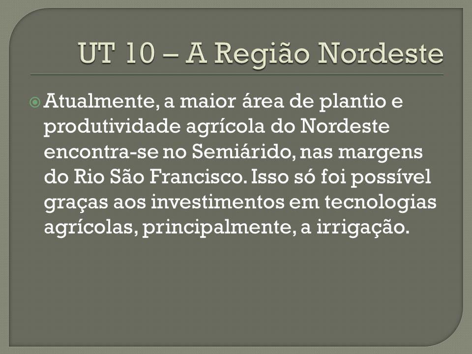 Atualmente, a maior área de plantio e produtividade agrícola do Nordeste encontra-se no Semiárido, nas margens do Rio São Francisco.