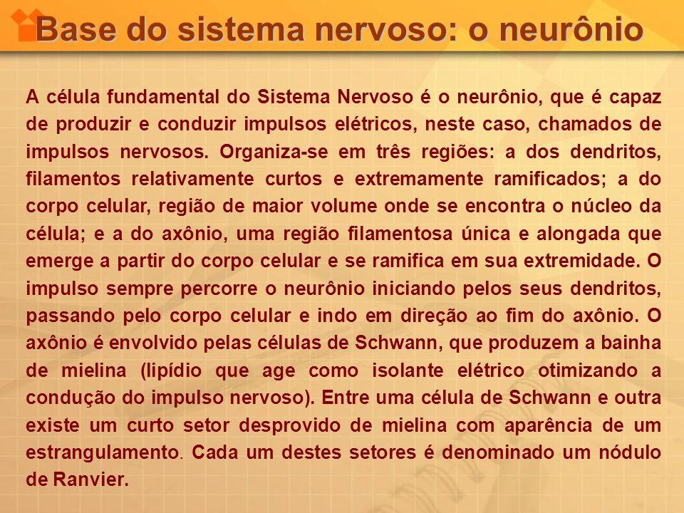 Base do sistema nervoso: o neurônio A célula fundamental do Sistema Nervoso é o neurônio, que é capaz de produzir e conduzir impulsos elétricos, neste