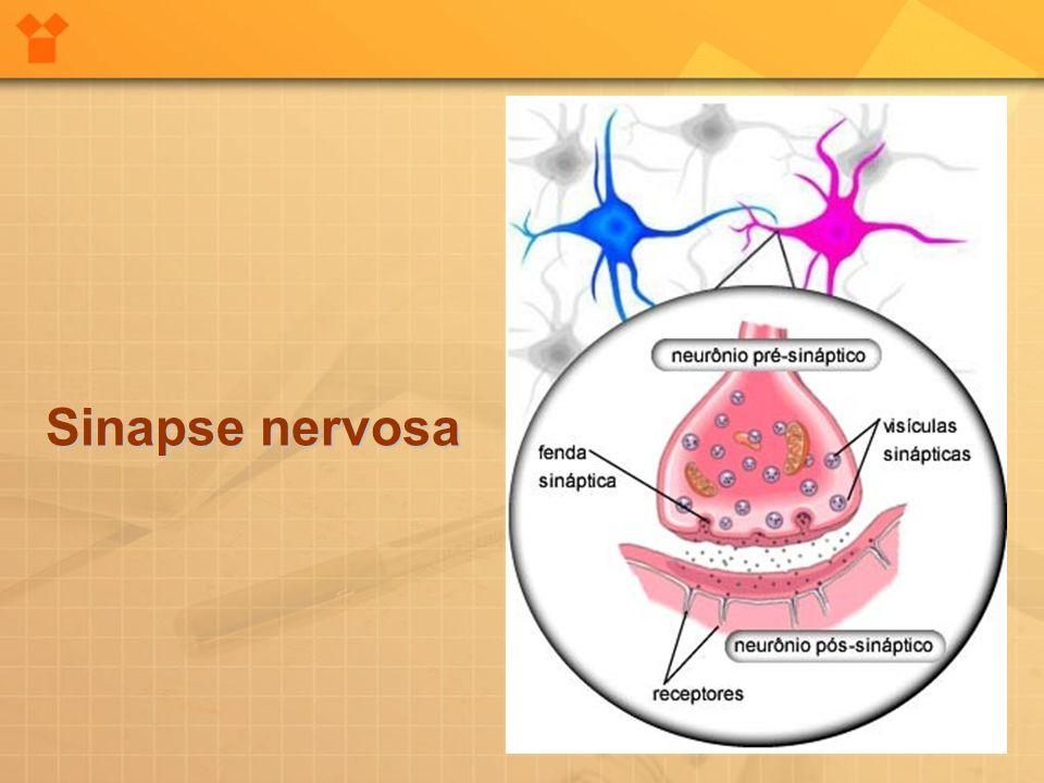 Sinapse nervosa