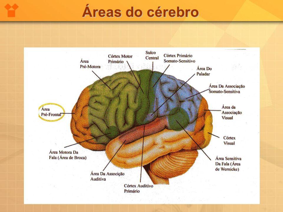Áreas do cérebro
