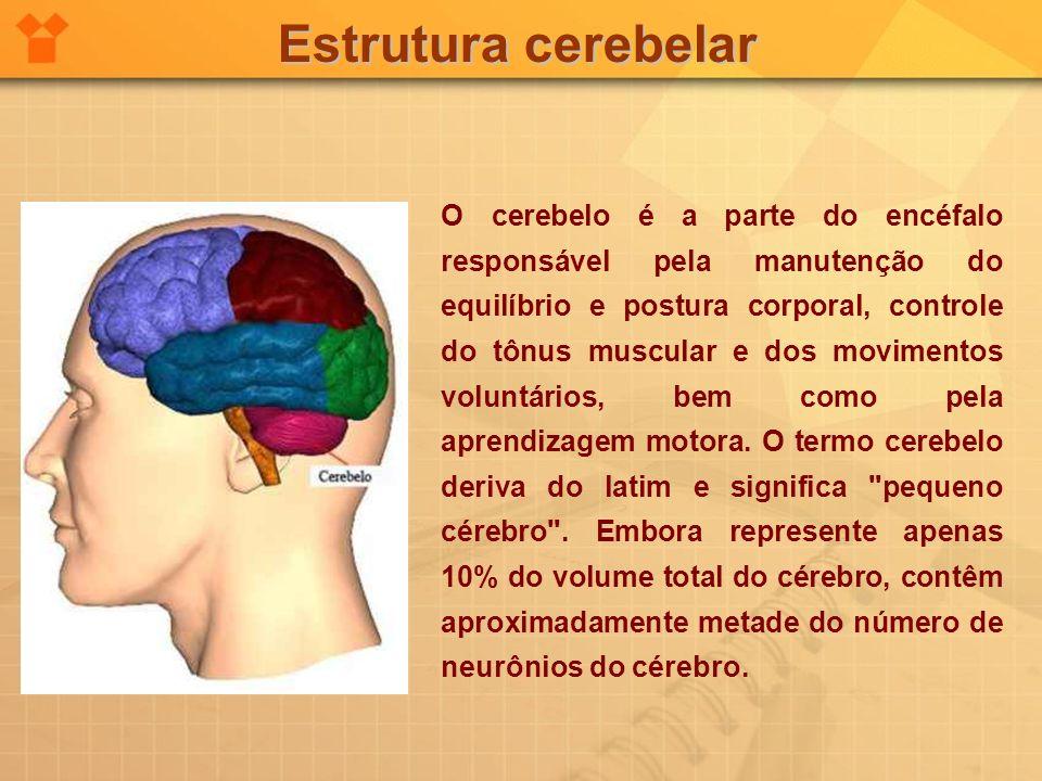 Estrutura cerebelar O cerebelo é a parte do encéfalo responsável pela manutenção do equilíbrio e postura corporal, controle do tônus muscular e dos mo