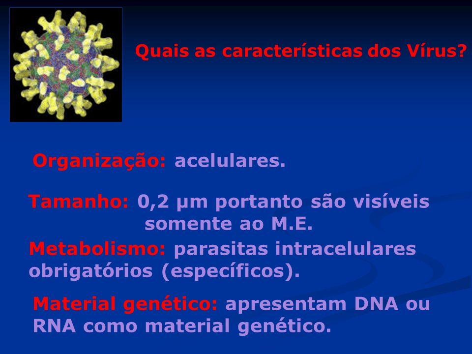 Quais as características dos Vírus? Tamanho: 0,2 µm portanto são visíveis somente ao M.E. Material genético: apresentam DNA ou RNA como material genét
