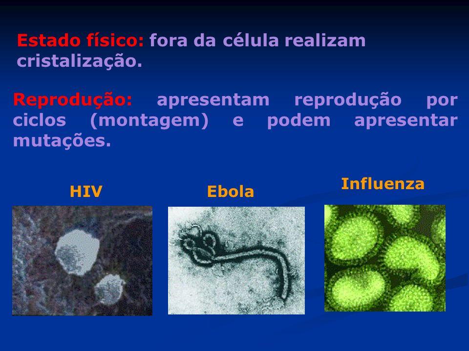 Estado físico: fora da célula realizam cristalização. Reprodução: apresentam reprodução por ciclos (montagem) e podem apresentar mutações. HIVEbola In