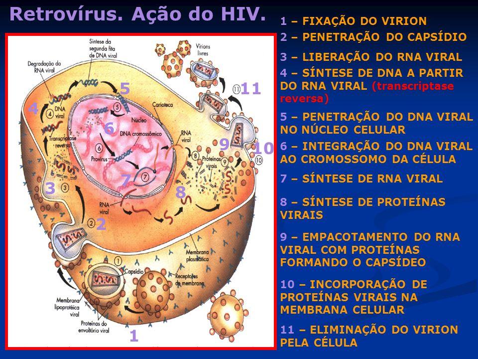 Retrovírus. Ação do HIV. 1 – FIXAÇÃO DO VIRION 2 – PENETRAÇÃO DO CAPSÍDIO 4 – SÍNTESE DE DNA A PARTIR DO RNA VIRAL (transcriptase reversa) 5 – PENETRA