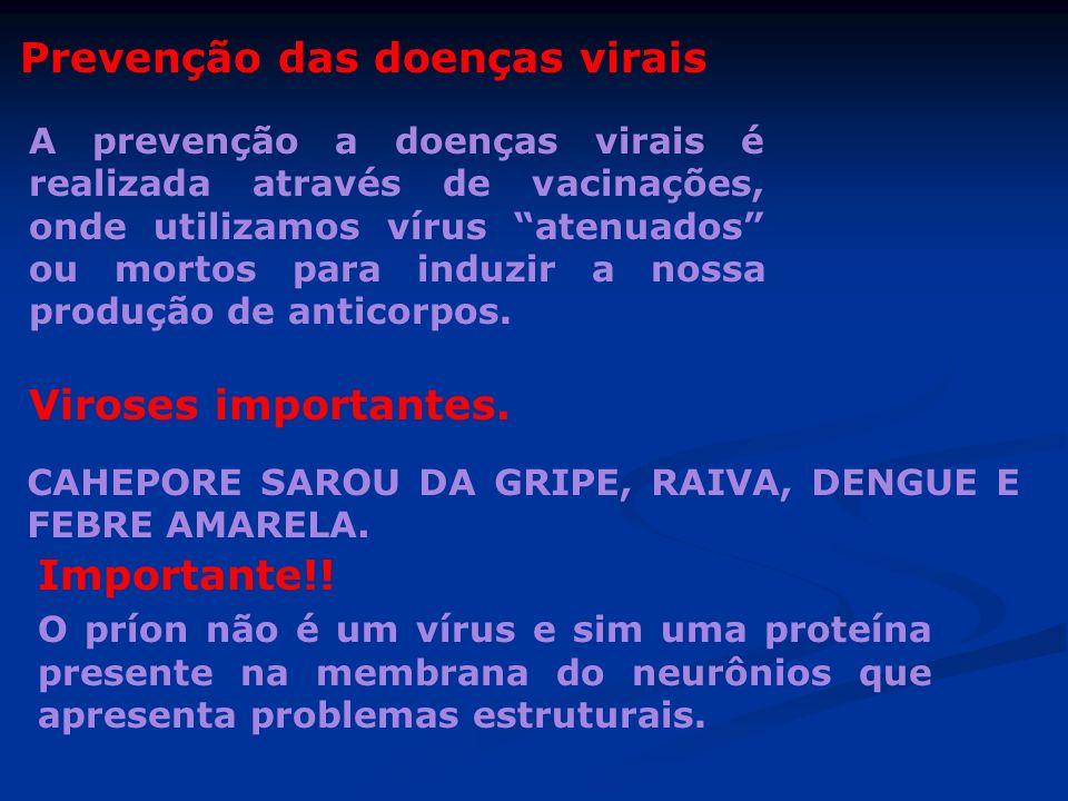 Prevenção das doenças virais A prevenção a doenças virais é realizada através de vacinações, onde utilizamos vírus atenuados ou mortos para induzir a
