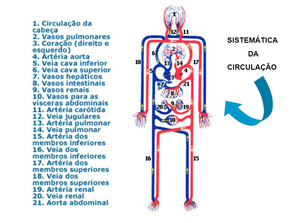 SISTEMÁTICA DA CIRCULAÇÃO