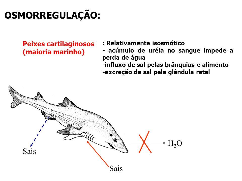 100 200 300 400 500 600 Tubarões e arraias Osteíctes marinhos Osteíctes Água doce Anfíbios ´Répteis Aves e mamíferos Concentração (mM) mar H 2 O doce