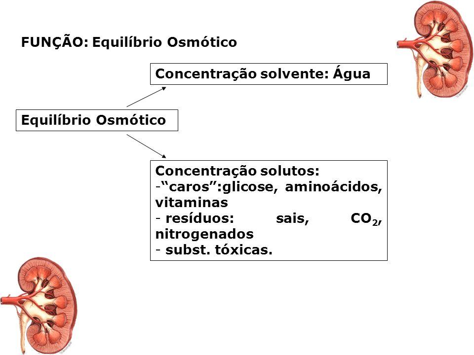 SISTEMA EXCRETOR (URINÁRIO) Regulação osmótica geral Regulação osmótica geral Sistema excretor nos vertebrados Sistema excretor nos vertebrados Rins:
