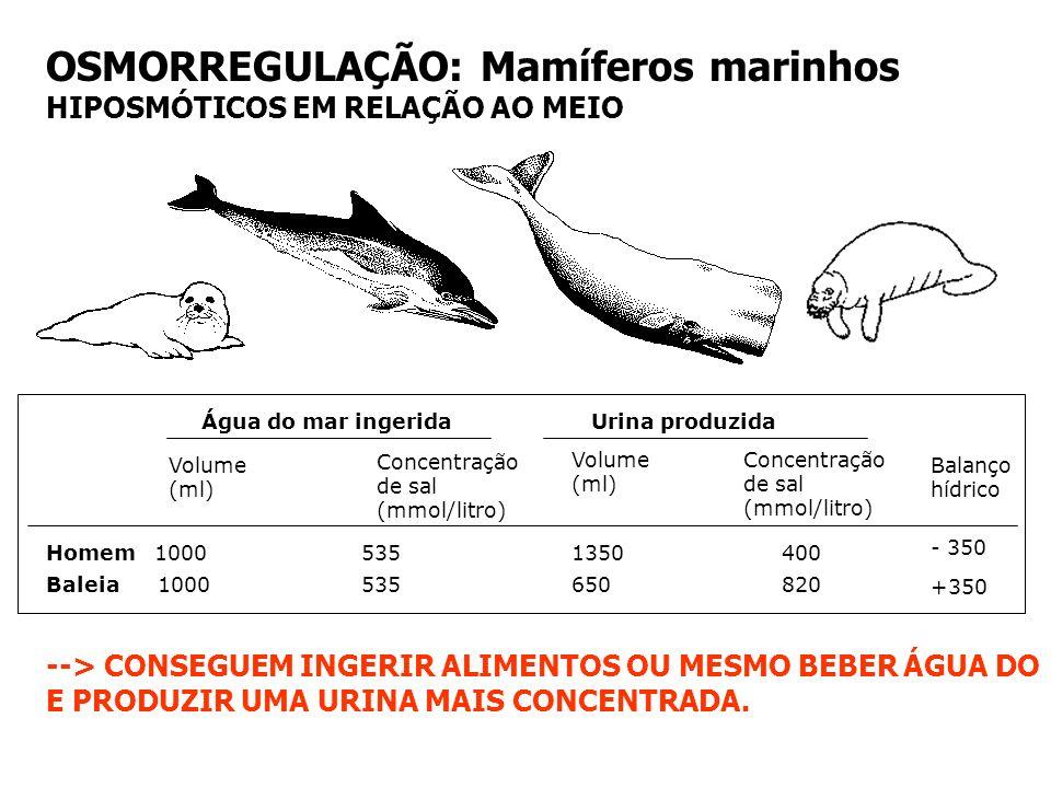 GLÂNDULA DE SAL EXCREÇÃO OSMORREGULAÇÃO: Répteis e Aves marinhos Escassez de água e excesso de sal (alimento)