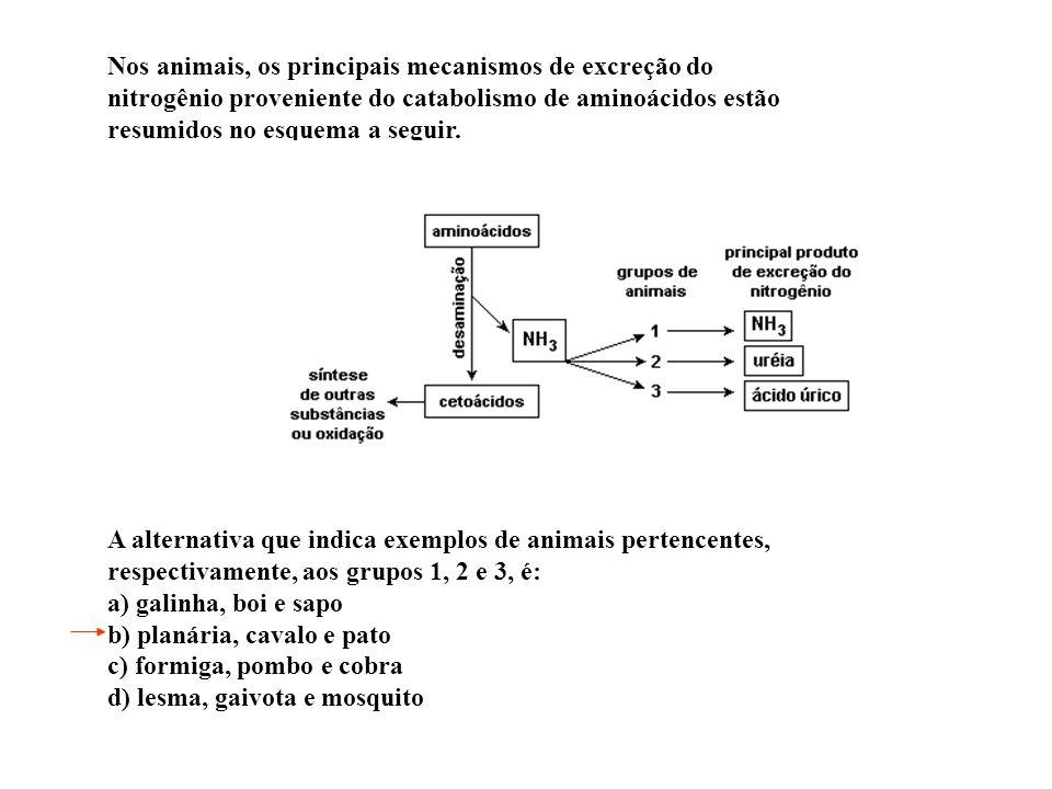 OSMORREGULAÇÃO: Mamíferos marinhos HIPOSMÓTICOS EM RELAÇÃO AO MEIO Água do mar ingerida Urina produzida Volume (ml) Concentração de sal (mmol/litro) V