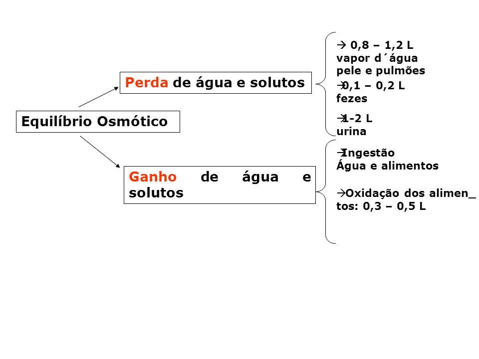 FUNÇÃO: Equilíbrio Osmótico Equilíbrio Osmótico Concentração solvente: Água Concentração solutos: -caros:glicose, aminoácidos, vitaminas - resíduos: s