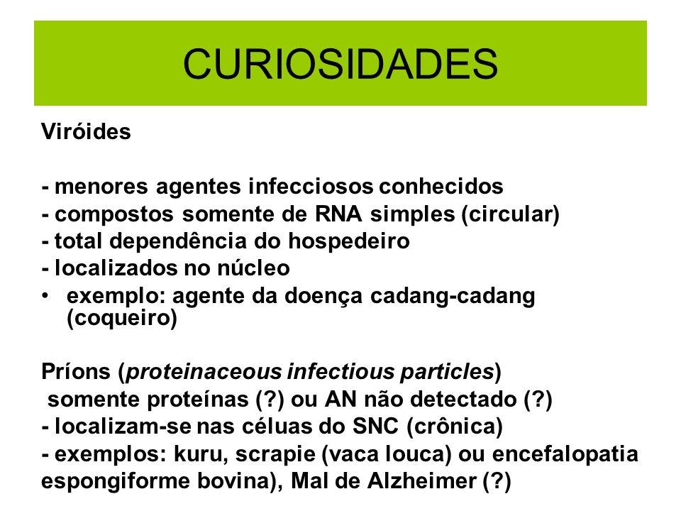 CURIOSIDADES Viróides - menores agentes infecciosos conhecidos - compostos somente de RNA simples (circular) - total dependência do hospedeiro - local
