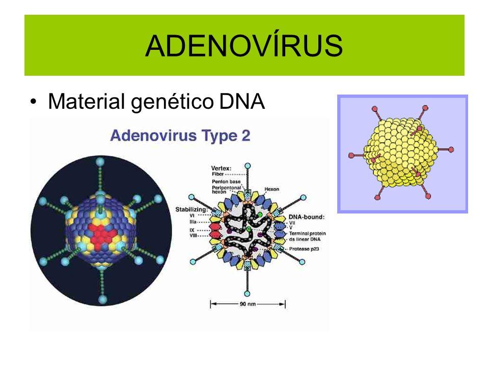 ADENOVÍRUS Material genético DNA