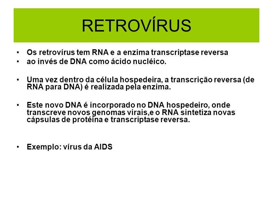 RETROVÍRUS Os retrovírus tem RNA e a enzima transcriptase reversa ao invés de DNA como ácido nucléico. Uma vez dentro da célula hospedeira, a transcri