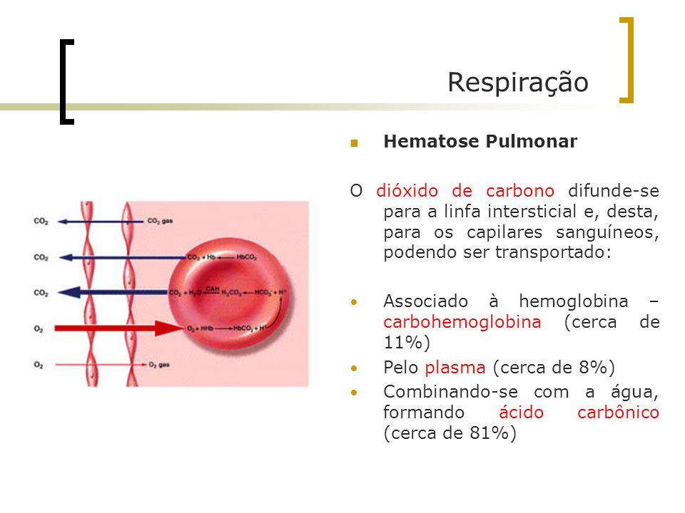 Respiração Hematose Pulmonar O dióxido de carbono difunde-se para a linfa intersticial e, desta, para os capilares sanguíneos, podendo ser transportad