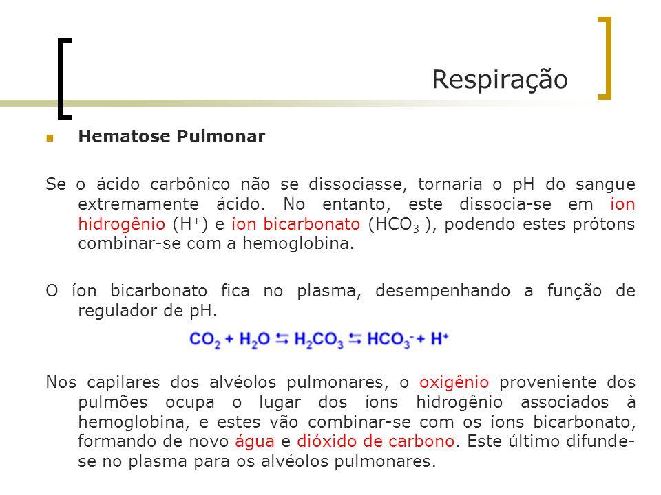 Respiração Hematose Pulmonar Se o ácido carbônico não se dissociasse, tornaria o pH do sangue extremamente ácido. No entanto, este dissocia-se em íon