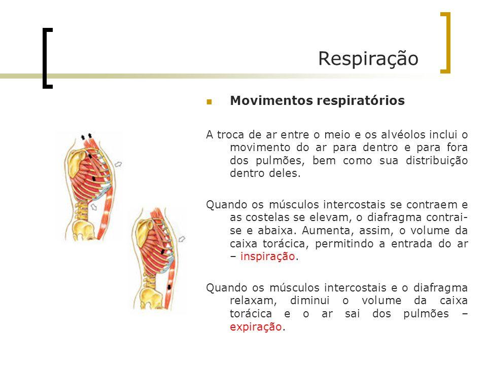 Respiração Movimentos respiratórios A troca de ar entre o meio e os alvéolos inclui o movimento do ar para dentro e para fora dos pulmões, bem como su