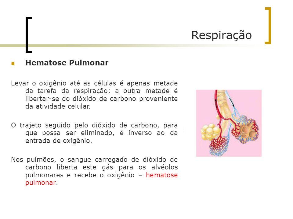 Respiração Hematose Pulmonar Levar o oxigênio até as células é apenas metade da tarefa da respiração; a outra metade é libertar-se do dióxido de carbo