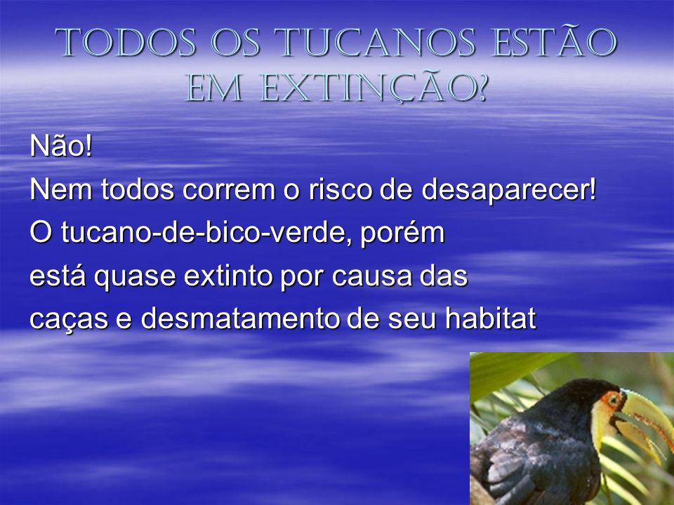 Todos os tucanos estão em extinção? Não! Nem todos correm o risco de desaparecer! O tucano-de-bico-verde, porém está quase extinto por causa das caças