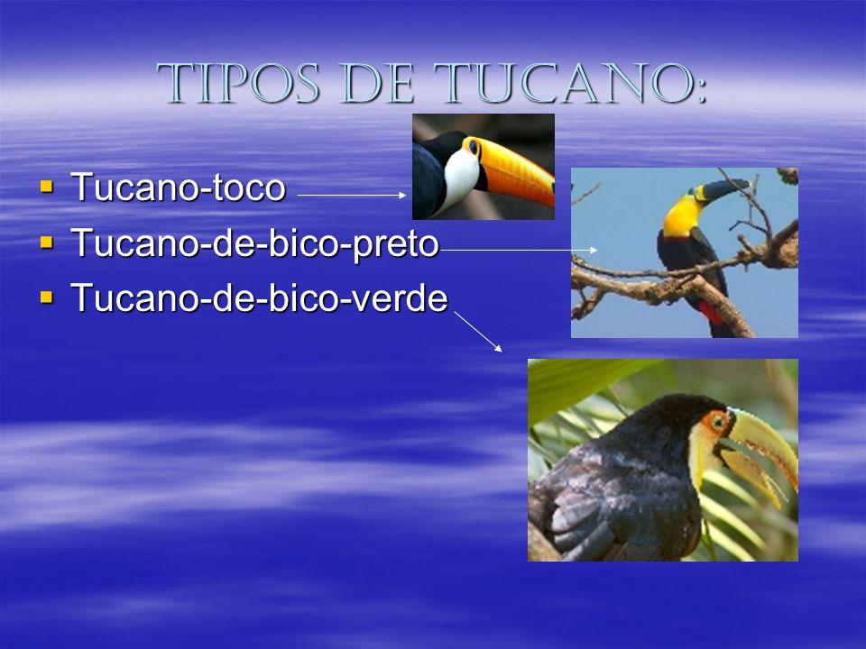 Tipos de tucano: Tucano-toco Tucano-toco Tucano-de-bico-preto Tucano-de-bico-preto Tucano-de-bico-verde Tucano-de-bico-verde