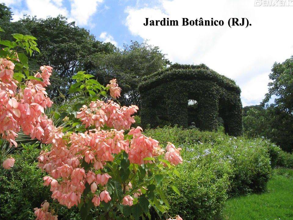 BRASIL COLÔNIA (1500 – 1822) O PROCESSO DE INDEPENDÊNCIA Jardim Botânico (RJ).