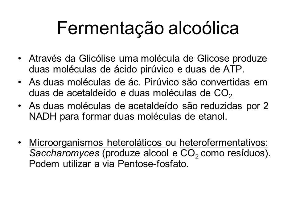 Fermentação alcoólica Através da Glicólise uma molécula de Glicose produze duas moléculas de ácido pirúvico e duas de ATP.