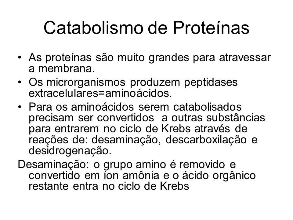 Catabolismo de Proteínas As proteínas são muito grandes para atravessar a membrana.