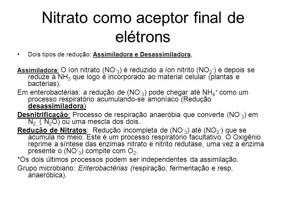 Nitrato como aceptor final de elétrons Dois tipos de redução: Assimiladora e Desassimiladora, Assimiladora: O íon nitrato (NO - 3 ) é reduzido a íon nitrito (NO 2 - ) e depois se reduze a NH 3 que logo é incorporado ao material celular (plantas e bactérias).