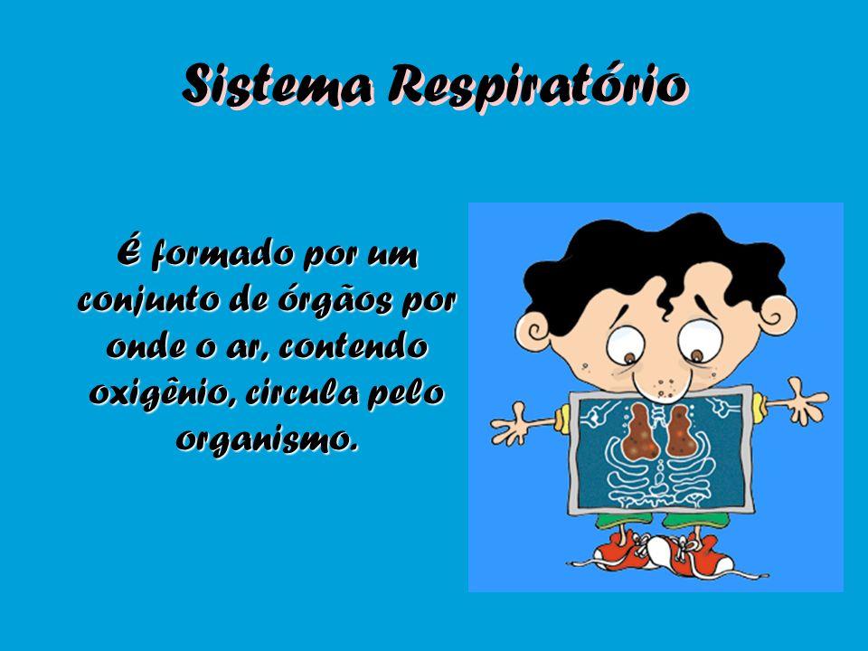 Entendendo o funcionamento do sistema respiratório...