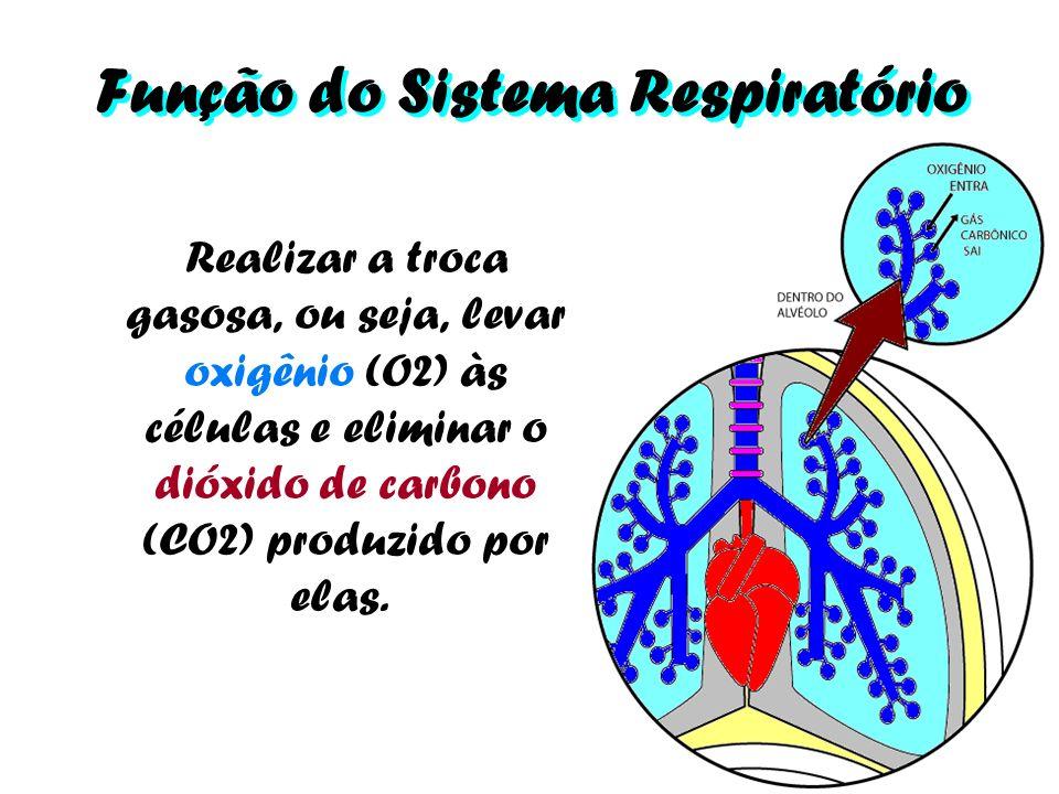 Função do Sistema Respiratório Realizar a troca gasosa, ou seja, levar oxigênio (O2) às células e eliminar o dióxido de carbono (CO2) produzido por el
