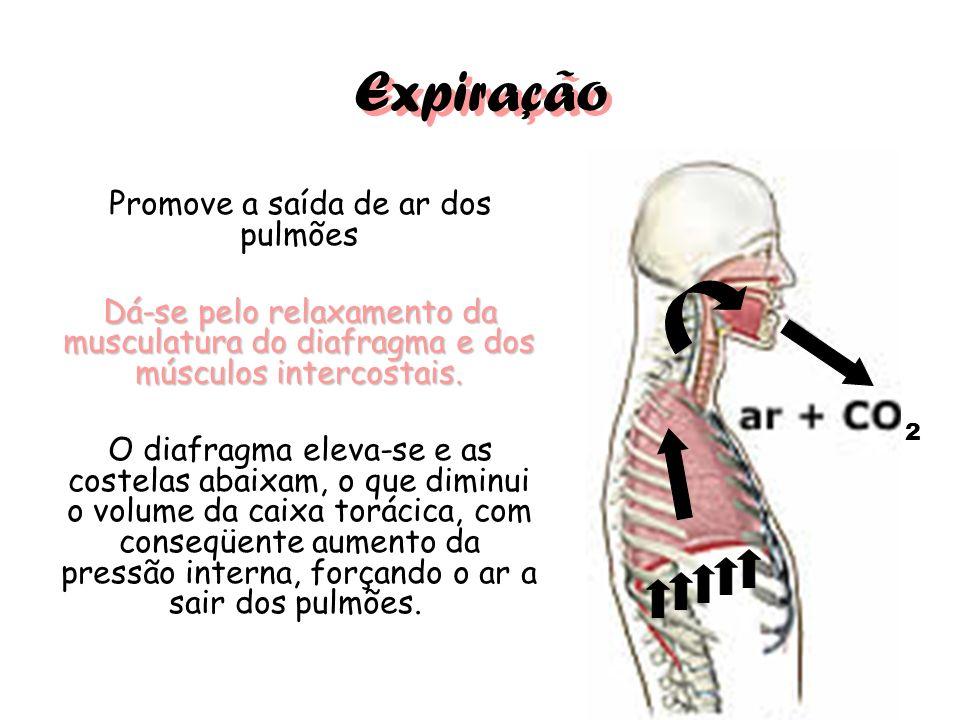 Expiração Promove a saída de ar dos pulmões Dá-se pelo relaxamento da musculatura do diafragma e dos músculos intercostais. O diafragma eleva-se e as