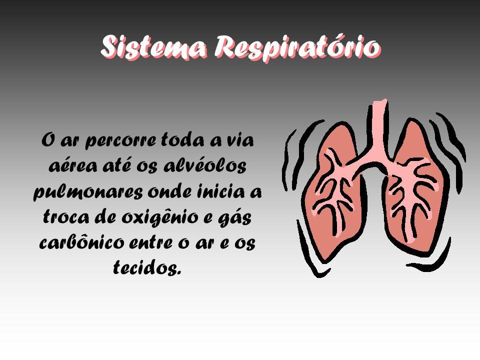 Sistema Respiratório O ar percorre toda a via aérea até os alvéolos pulmonares onde inicia a troca de oxigênio e gás carbônico entre o ar e os tecidos