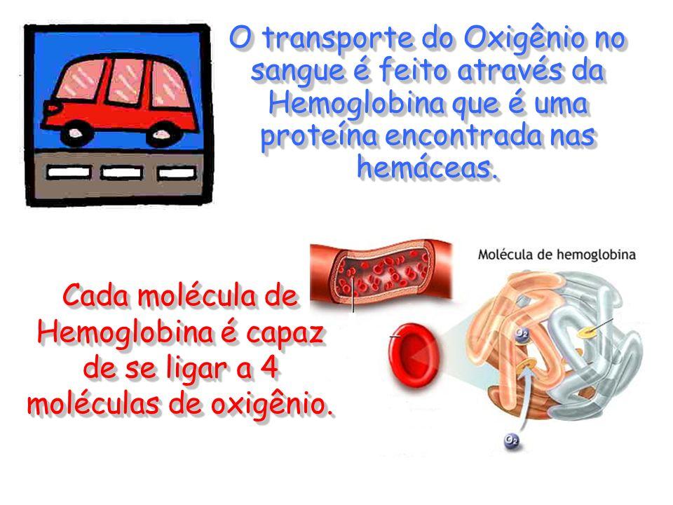 O transporte do Oxigênio no sangue é feito através da Hemoglobina que é uma proteína encontrada nas hemáceas. Cada molécula de Hemoglobina é capaz de