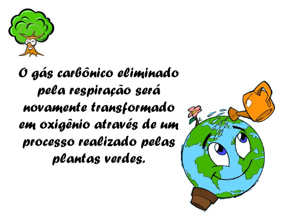 O gás carbônico eliminado pela respiração será novamente transformado em oxigênio através de um processo realizado pelas plantas verdes.