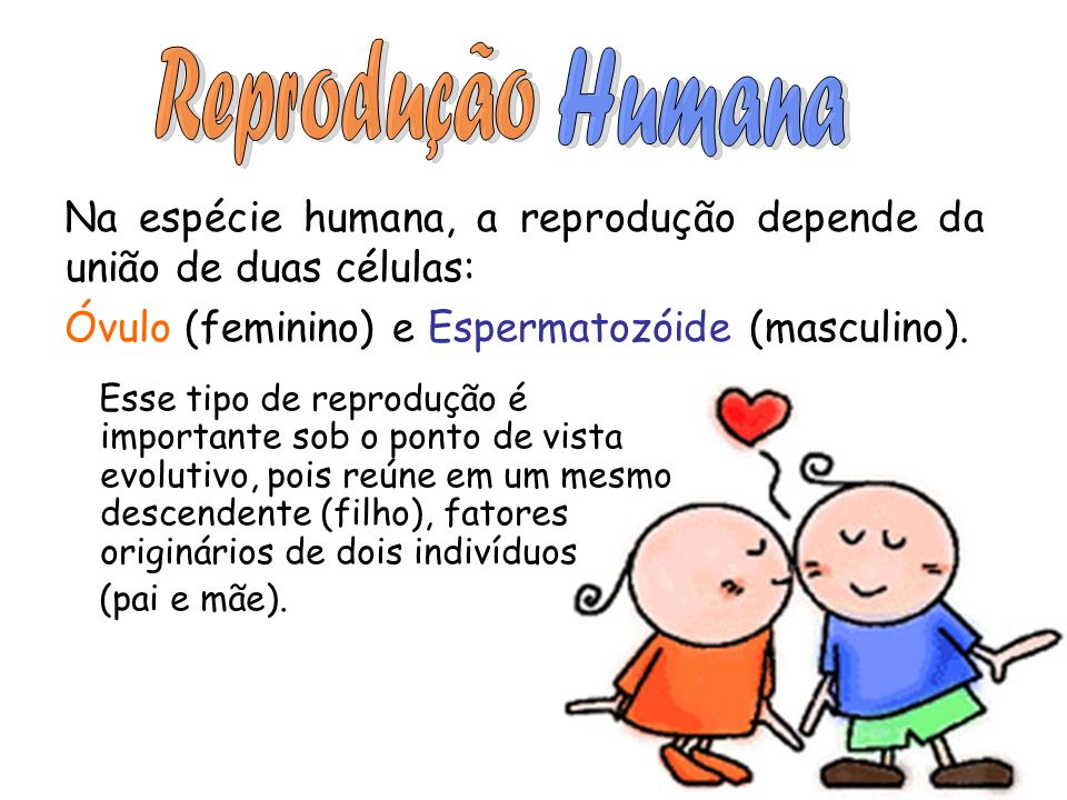 Na espécie humana, a reprodução depende da união de duas células: Óvulo (feminino) e Espermatozóide (masculino). Esse tipo de reprodução é importante