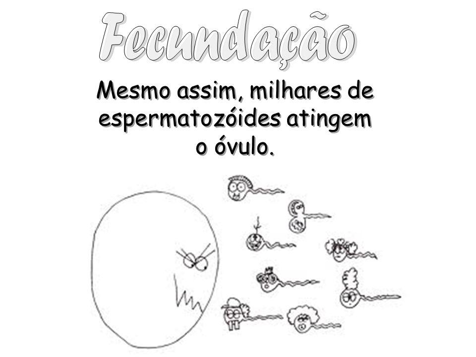 Mesmo assim, milhares de espermatozóides atingem o óvulo. Mesmo assim, milhares de espermatozóides atingem o óvulo.