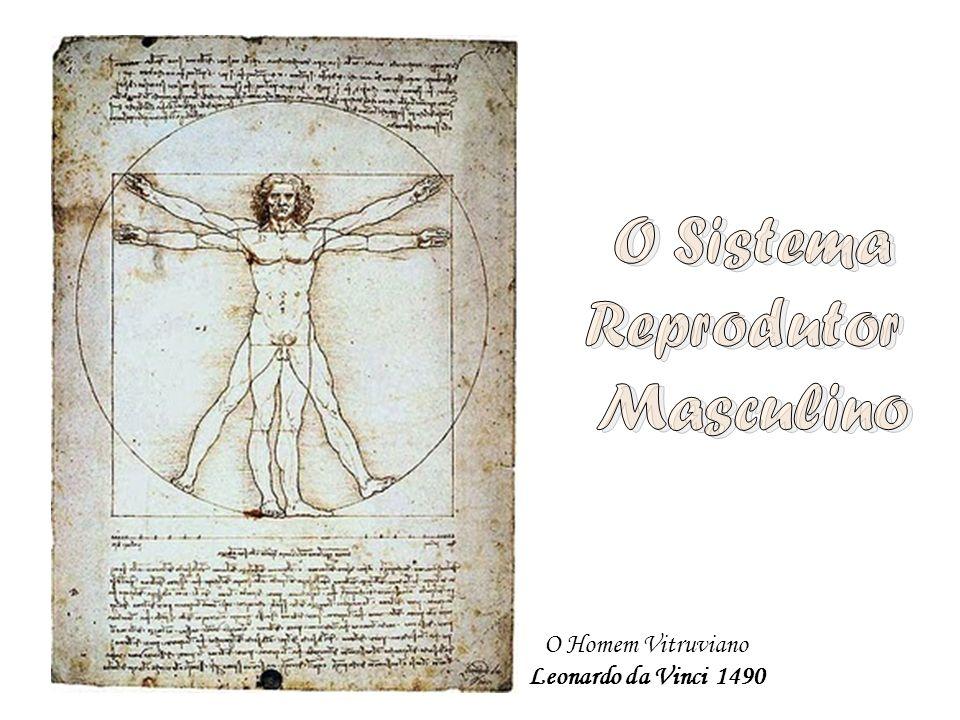 O Homem Vitruviano Leonardo da Vinci 1490