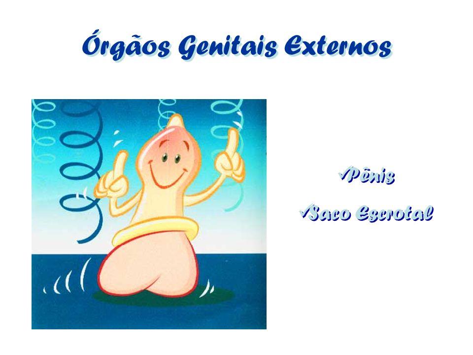 Órgãos Genitais Externos Pênis Saco Escrotal Pênis Saco Escrotal