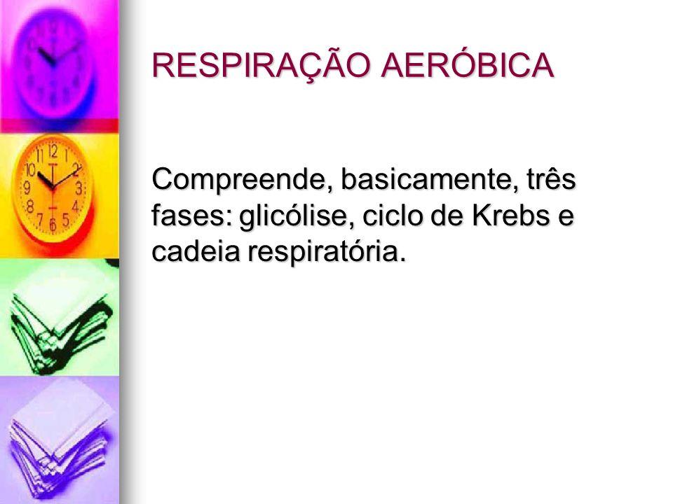 RESPIRAÇÃO AERÓBICA RESPIRAÇÃO AERÓBICA Compreende, basicamente, três fases: glicólise, ciclo de Krebs e cadeia respiratória.