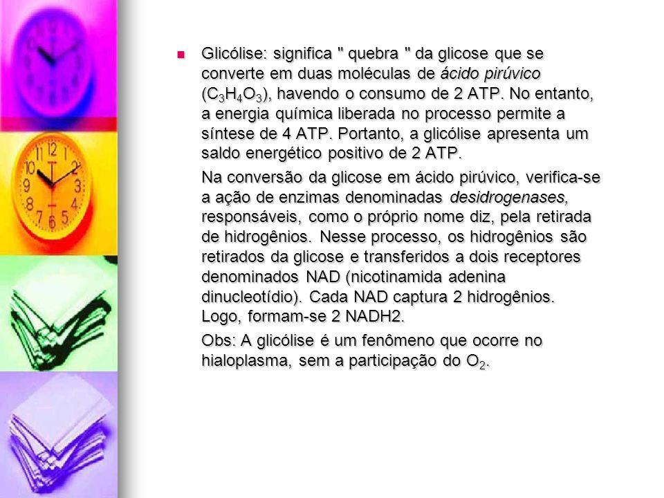 Glicólise: significa quebra da glicose que se converte em duas moléculas de ácido pirúvico (C 3 H 4 O 3 ), havendo o consumo de 2 ATP.