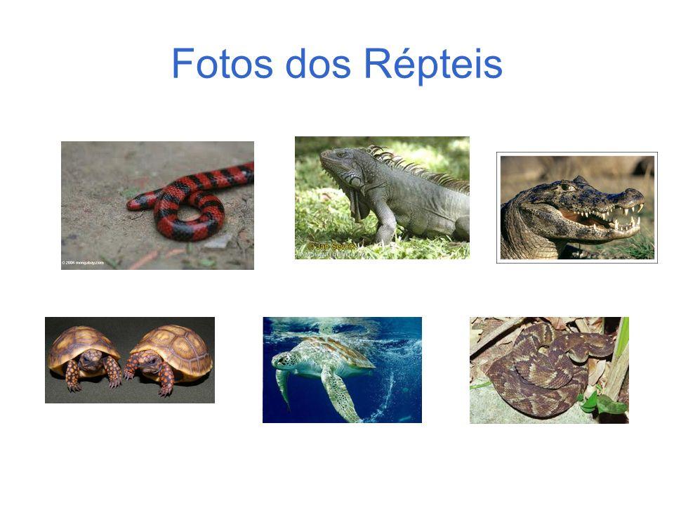 Fotos dos Répteis